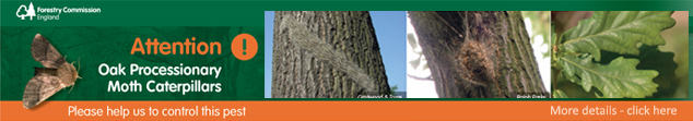 Attention, Oak Processionary Moth Caterpillars. Click here